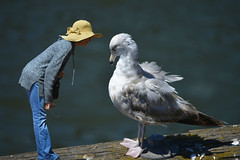 The Repremand (swong95765) Tags: woman animal seagull gull human conversation discussion scolding conversing repremand