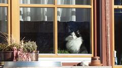 Cat at Niederdorf/ Villa Bassa, South Tyrol/ Alto Adige (cultcha.org) Tags: italy italia dolomiti altoadige southtyrol niederdorf dolomiten villabassa
