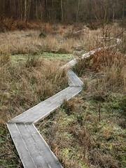 Zig Zag Wanderer (Damian_Ward) Tags: winter photography path buckinghamshire frosty bucks zigzag burnham mire burnhambeeches cityoflondoncorporation damianward ©damianward