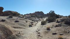 Hiking in Joshua Tree NP