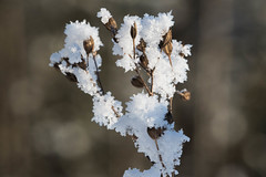 Frozen (Bjrn Lundby) Tags: winter snow norway frozen outdoor blury nittedal sigma150mm canoneos7dmarkii