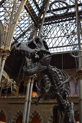 Spare Ribs (dhcomet) Tags: history animal museum fauna university dinosaur natural oxford rex oxfordshire tyrannosaurus oxon