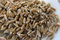 06-IMG_8474 (hemingwayfoto) Tags: food essen landwirtschaft saat trocken reif dit samen nahrung roh lebensmittel getreide krner gesund ernhrung ergnzung ackerbau grnkern zutat ernhren
