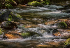 Dedicated to John Denver (kathybaca) Tags: wild fish cold nature water beautiful june oregon forest river landscape outdoors happy waterfall moss rocks stream pretty hiking wildlife rapids boulders brook wilderness trout refreshing slippery johndenver
