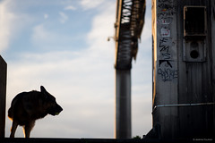 Some dog (Jrmie POUTRAIN) Tags: road travel sky cloud dog chien france lost stranger explore rouen normandie jeremie normandy seinemaritime poutrain