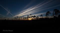 IMG_0174 ENP (JRCmoreno) Tags: blue trees winter sunset sky grass unitedstates florida bluesky swamp everglades evergladesnationalpark sabana