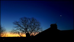Cold and clear (will668) Tags: morning trees sky moon tree sunrise dawn rooftops silhouettes bluehour cloudless clearskies