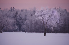 Waking Dream (flashfix) Tags: trees winter snow ontario canada cold ice nature field sunrise frozen woods nikon frost ottawa blues dogpark pinksky mothernature frosted 2016 somuchsnow untouchedsnow d7000 nikond7000 55mm300mm 2016inphotos february192016