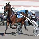 Papagayo E of Norway- 2015 International Trot - Yonkers Trot thumbnail