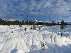 Along the skitrail (Mrs.Snowman) Tags: sun snow norway skiing sunnmøre ørskogfjellet