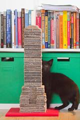 IMG_3023 (BalthasarLeopold) Tags: pet cats pets animal animals cat blackcat mammal kitten feline dof kittens felines blackcats indoorcat dephtoffield scratchpost