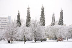 _APB2670 (2) (plazaberribaranain) Tags: nikon nieve baraain invierno agustin navarre elurra navarra nafarroa negua d7200 agustinpea nikond7200 plazaberri plazaberriinfo