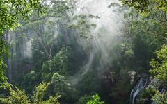 Sunrays through the clouds at Twin Falls (NettyA) Tags: misty clouds forest waterfall rainforest australia twinfalls bushwalking qld queensland sunrays bushwalk eucalypts springbrook goldcoasthinterland 2016 springbrooknationalpark scenicrim seqld warriecircuit scbwc sonya7r