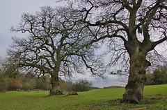 1217-32L (Lozarithm) Tags: 1770 studley calne k50 treesshrubs smcpda1770mmf4alifsdm pentaxzoom