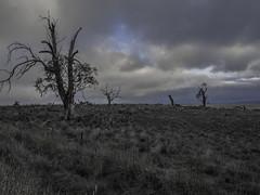 skyblue (bart.kwasnicki) Tags: australia outback