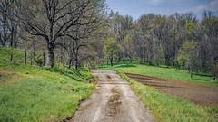 White Cemetery Road (myoldpostcards) Tags: road trees texture rural landscape illinois spring seasons unitedstates country il hills dirtroad rd gravelroad whitecemetery centralillinois menardcounty myoldpostcards vonliski