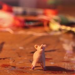 macro monday pig (f.tyrrell717) Tags: macro pig with p monday starts pruple