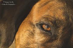 ojito (Noemi Ce Re) Tags: dog chien eye ojo perro