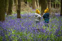Nature Playground (Andy Valente) Tags: uk flowers england bluebells woodland