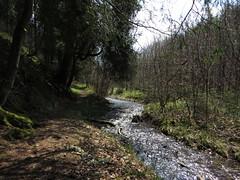 IMG_8289 (Bike and hiker) Tags: ardennen ardennes eifel hellenthal narzissen narcissen oostkantons rocherath olef krinkelt holzwarche jansbach bachtaler