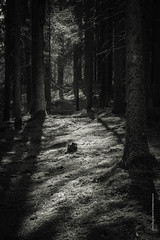 Light and trees (imagomagia) Tags: wood light blackandwhite art monochrome forest naturallight monocromatic nophotoshop bnw fineartphotography blackandwhitephotography artphoto artphotography conceptualphotography