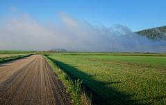 Morning Fog!.jpg (Herringbone2) Tags: blueskies mountainrange goldenlight greenfields morninghours dirtraod lowlevelfog
