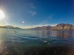 2 (Miguel Angel Hoyos) Tags: atardecer italia laguna bergamo gaviotas