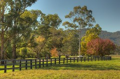 Where I live series..Arrowfield Stud (cupitt1) Tags: horse scone racehorse thoroughbred huntervalley arrowfield redoubtschoice