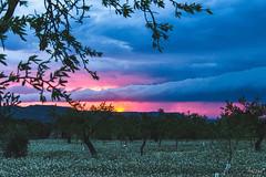 El meu cel d'abril (ancoay) Tags: sunset sky primavera sol clouds de spring almond cel cielo nubes puesta nvols almendros ametllers canon600d ancoay