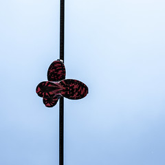 hanging on a wire (Brger J) Tags: square wire nikon shoes outdoor hanging nikkor 1x1 d810