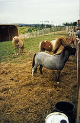 24-0886 03 - Mini Horses edited-1
