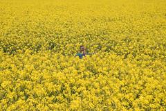 Where is my daughter? (thomas druyen) Tags: flower girl landscape outdoor pflanze feld rape kind gelb blume blte landschaft raps mdchen tochter rapsfeld ackersenf