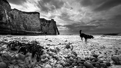 Etretat France (NICOLAS BELLO) Tags: leica light sea sky blackandwhite bw cloud dog chien mer france beach dogs nature monochrome beautiful animal animals stone landscape freedom amazing sand noiretblanc stones lumiere beaches paysage animaux plage animale baw