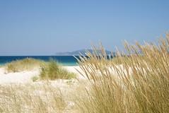 Dorado y azul (xirmi) Tags: sea beach landscape mar sand paradise wildlife playa paisaje arena galicia soledad paraiso carnota costadelamuerte playadecarnota