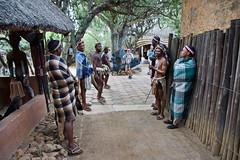 Zulu Cultural Village (Magdeburg) Tags: africa southafrica village south afrika sdafrika cultural zulu sd zululand shakaland zuluculturalvillage zulucultural