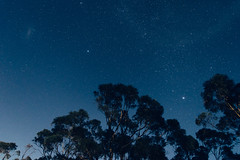 Beacon Point (perkot) Tags: longexposure trees light tree night stars landscape nikon nightscape astrophotography d610