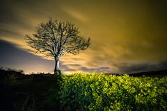 Campo de colza (Alfix61) Tags: tree night canon noche arboles nubes nocturna nocturno largaexposicin alfix