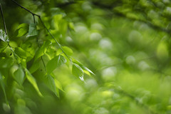 DSC08541 (gabriella.lavati) Tags: color green vintage spring bokeh sony fineart m42 manual manualfocus swirly cyclop dreamlens deram sonyalpha 85mmf15 mflens bokehdream bokehkinglens sesoned sonya7ii