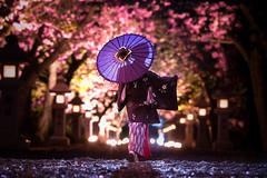 晴れ舞台 (のの♪) Tags: cherry blossom cherryblossom dd 夜景 並木 夜桜 八重桜 和傘 dollfiedream