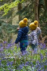 Bobbles in Bluebells (Andy Valente) Tags: uk flowers england bluebells woodland
