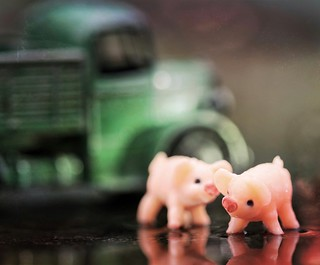 Party Pigs in a Puddle ;)