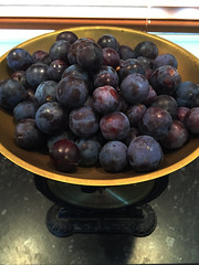 65/365 Pre-jam state (chestnutgrey) Tags: home apple march purple 65 iphone 2016 damsons 36565 36665 65365 65366 appleiphone project366 damsonplums iphone6 chestnutgrey sarahoettli appleiphone6 march2016 366the2016edition 5march2016