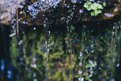 DSC04412 (Benjamin Ling Photography) Tags: plants nature water rock gardens digital forest 35mm lens photography moss bokeh sony botanic canberra algae portra fee whacking preset t15 samyang a7s