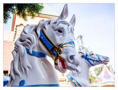 Disneyland Horses (mhocter) Tags: california disneyland carousel orangecounty anaheim carouselhorse olympuspenepl2