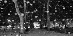 Alibunar, park (Sareni) Tags: park trees winter light blackandwhite bw snow tree night buildings way streetlight shadows tripod serbia january snowing zima noc twop srbija sneg banat 2016 drvo svetlost setaliste drvece zgrade staza senke crnobelo alibunar vovodina stalak juznibanat sareni ulicnasvetla padasnage