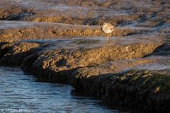 Image-30.jpg (PiperArcher2273) Tags: kingslynn titchwellmarsh