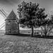 Le Vieux Moulin sur les côteaux...