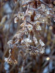 Nature's Jewels (ParkerRiverKid) Tags: ice frozen weeds backyard seedpods naturesjewels scavenger4 ansh67