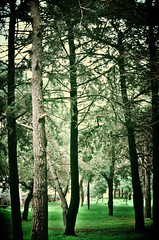 Forest (rodiann) Tags: park trees st forest greece rhodes fransisco