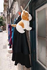 Puppy hangs to dry @ Lissabon (PaulHoo) Tags: street dog portugal puppy nikon humor dry laundry lissabon drying lightroom